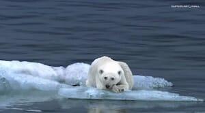 Nissan LEAF Polar Bear Commercial 2010