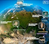 Animal protection: special projects / kremlin.ru