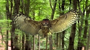 Louie Schwartzberg : Hidden miracles of the natural world