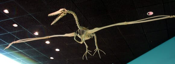 Pelagornis sandersi Temporal range: Upper Oligocene / en:Wikipedia