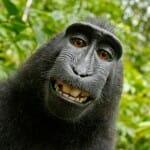 動物や自然による作品は著作権の対象とはならない