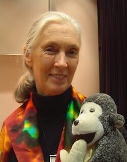 ジェーン・グドール(Jane Goodall)/ Wikipedia