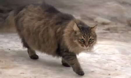 A long-haired cat named Masha / RuptlyTV