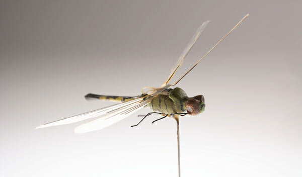 Dragonfly Insectothopter / CIA