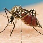 ジカ熱 緊急事態宣言:WHO(世界保健機関)