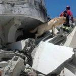 救助犬「ダイコ」7人を無事救助後に死亡(エクアドル地震)