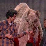 あなたの知らない、ラクダの本当の故郷(TED: Latif Nasser)