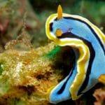 不思議な海の妖精、ウミウシの世界(Sea slug)