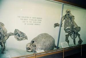 harvard-museum-4
